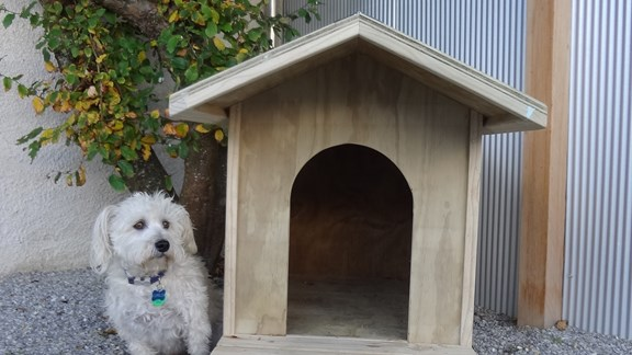 Kennel and Syrus outside.JPG